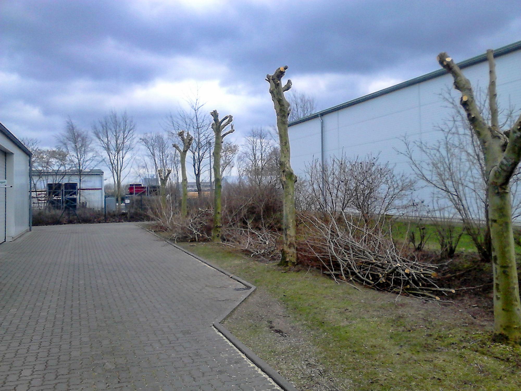 Baumrückschnitt-Martensdorf