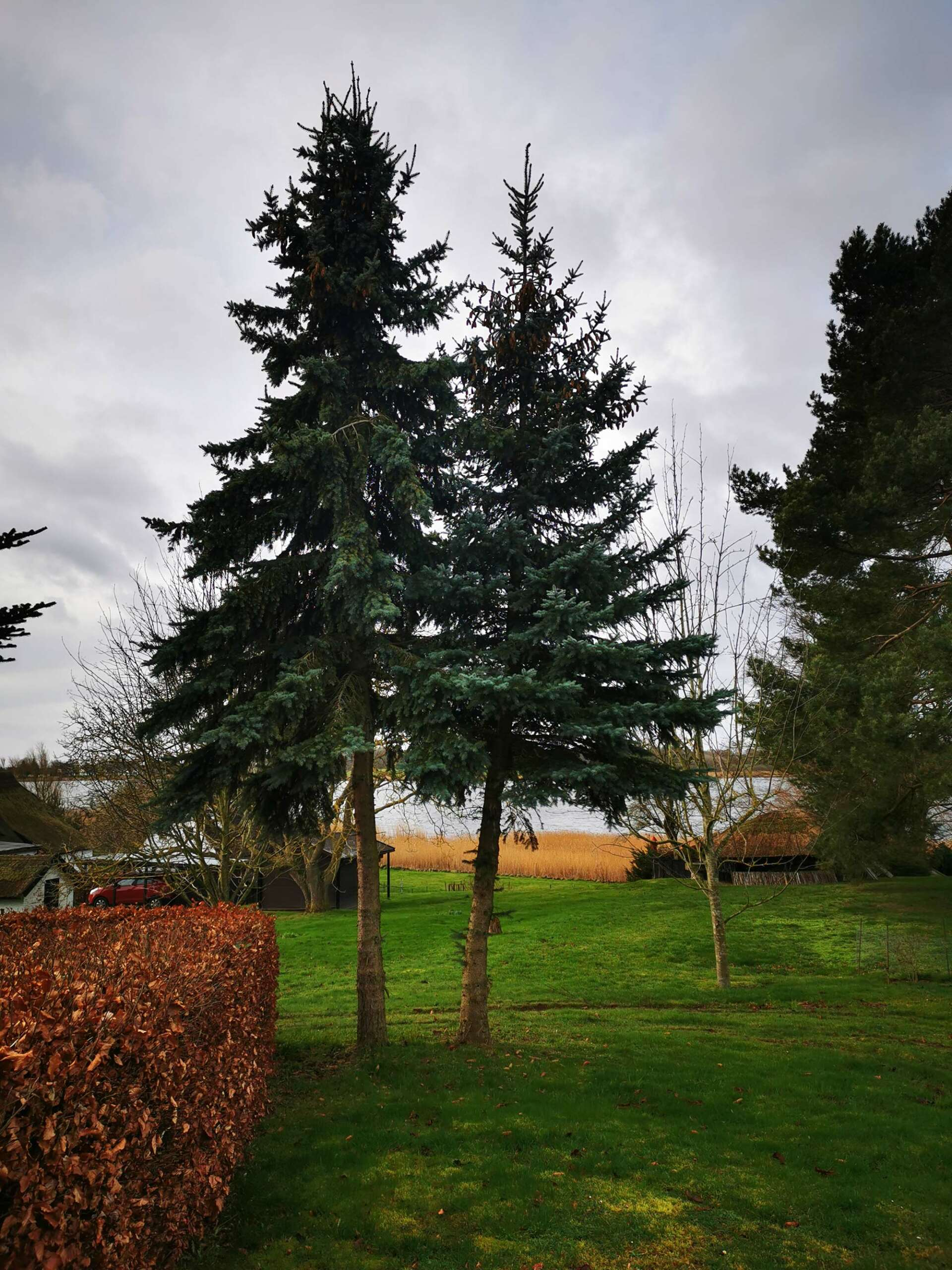 Baumfällung-Wreechen