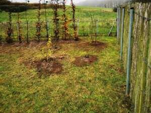 Heckenpflanzung Neuendorf